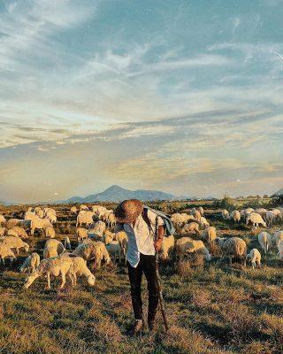 cậu bé chăn cừu