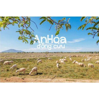 vẻ đẹp thơ mộng của Đồng cừu An Hòa Ninh Thuận