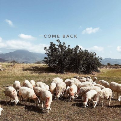 Cừu là loài vật rất hiền