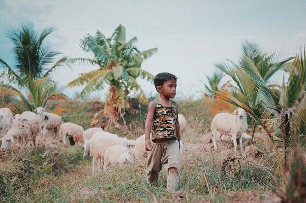 Cậu bé mục đồng thôn An Hòa