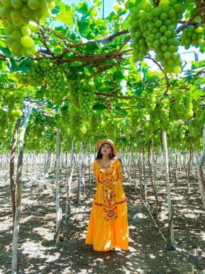 Vườn nho Ninh Thuận - Vườn nho thái An