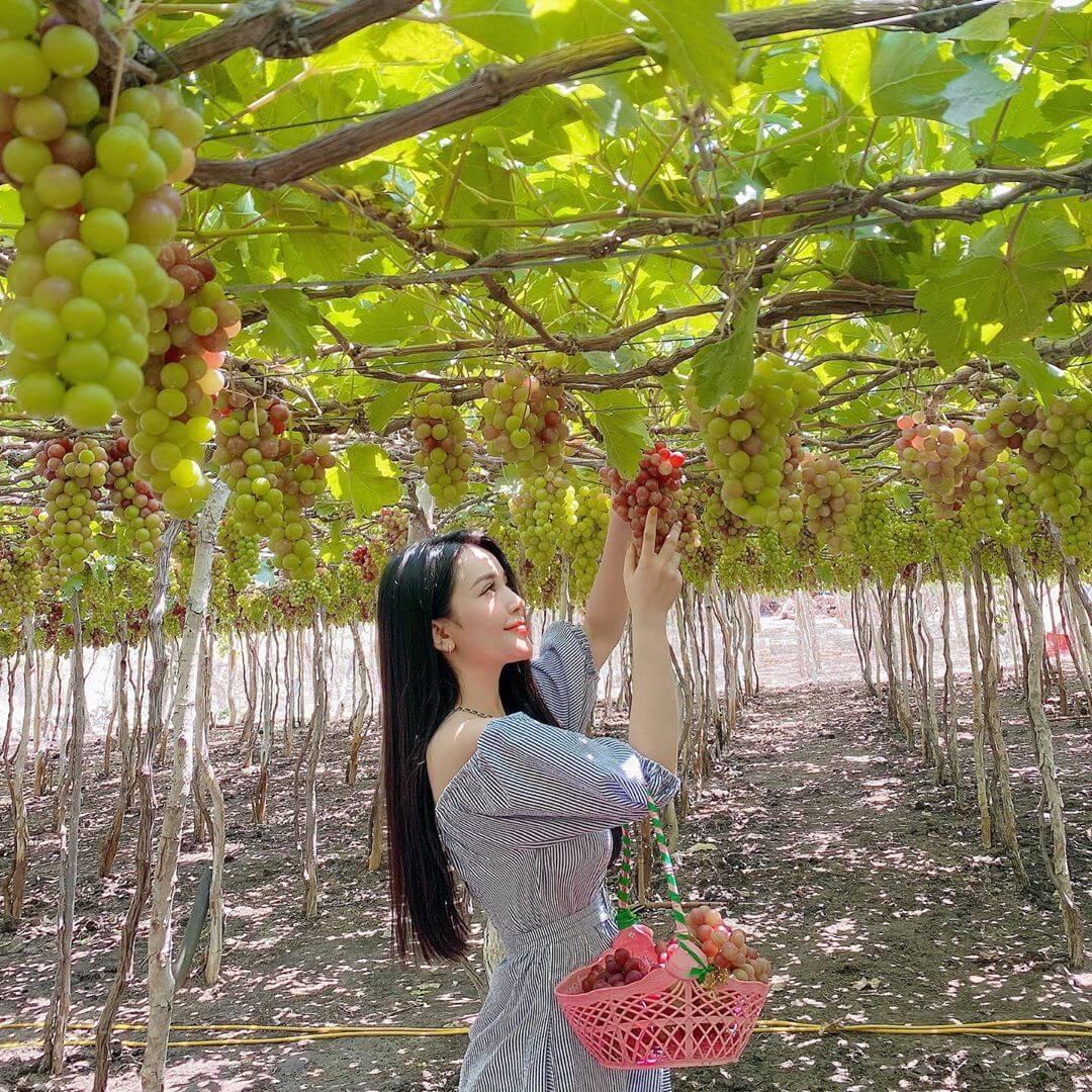 vườn nho Thái An - Ninh Thuận
