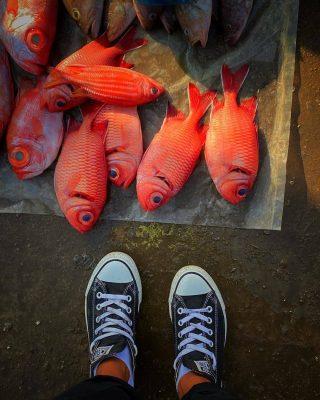 Nguồn hải sản dồi dào tại Đầm Nại Ninh Thuận