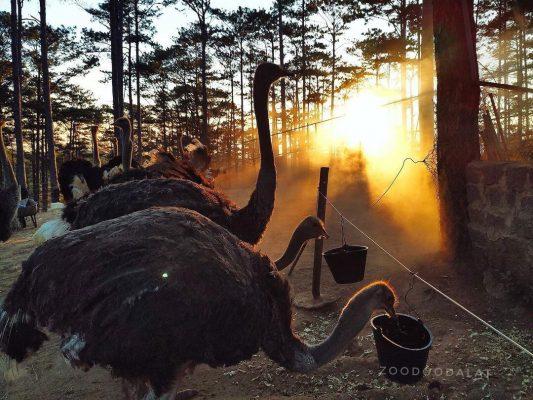 Đến sở thú Zoodoo thăm thú nhiều loài vật vô cùng đặc biệt