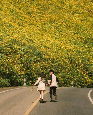 Các cặp đôi còn ngần ngại gì mà không nắm tay nhau đến mùa hoa Dã Quỳ