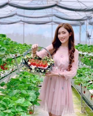 Tự tay hái những trái dâu đỏ mọng