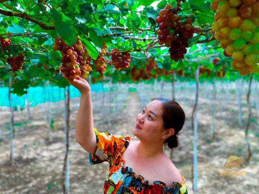 check in vườn nho Ninh Thuận